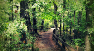 The Short Hike In Florida That's Unlike Any Other In The World