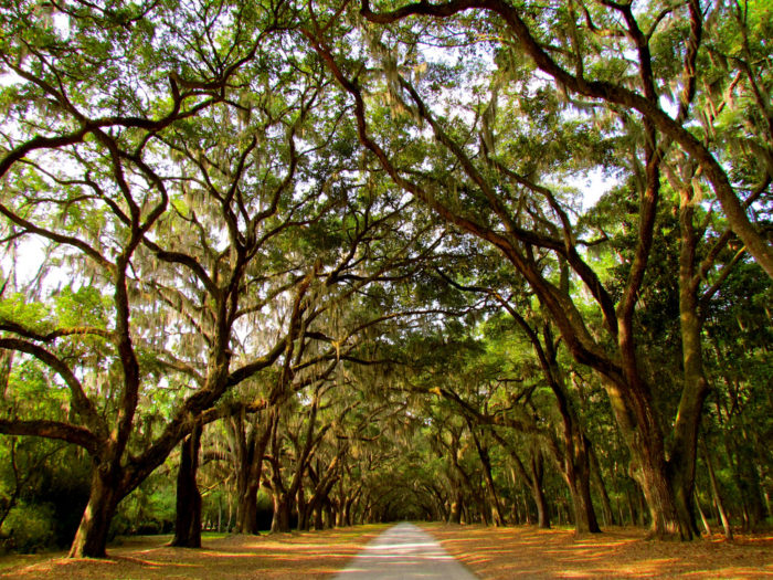 If you haven't yet experienced Wormsloe Historic Site, then it's high time you did.