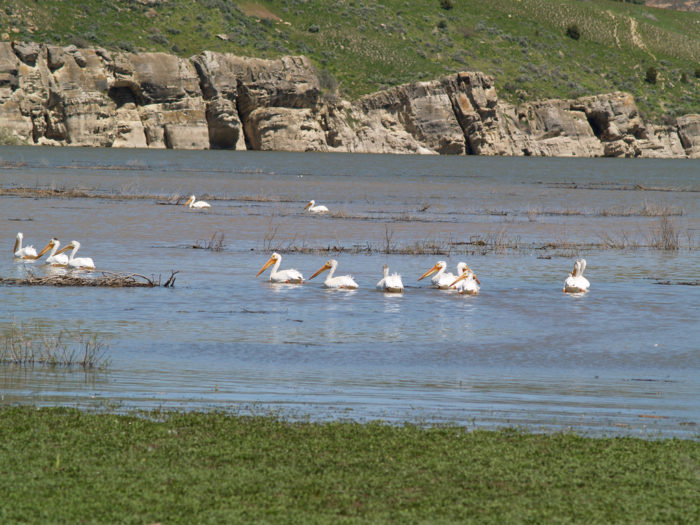 Depending on the time of year, you may see pelicans on the lake.