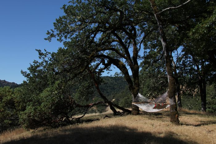 Keep going north toward Ukiah and enjoy the trees and nature. A hammock would be an even better find for serene relaxation.