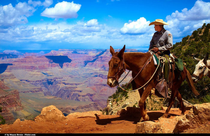 12. When you get to the Grand Canyon, one fantastic way is to ride a mule or horse down the trail.