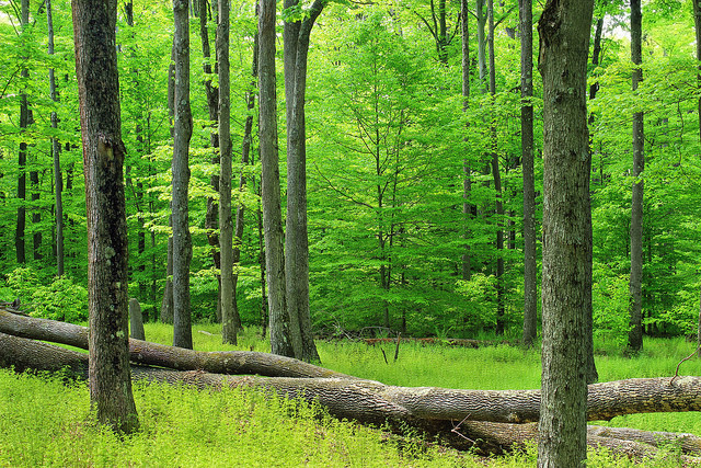 The second largest wild area in Pennsylvania, Hammersley's land is protected from motor vehicles, development, and the cutting down of trees.