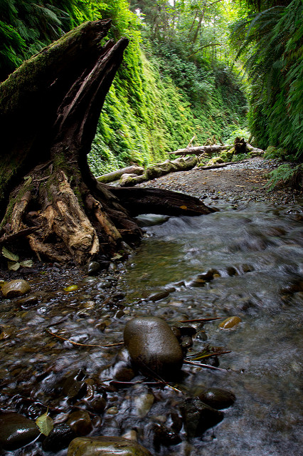 A stream runs through the  canyon walls. Wear sturdy footwear and puddle hop as you make your way up the trail.