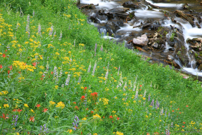 At the base of the falls, you'll find a lush meadow often covered in wildflowers.