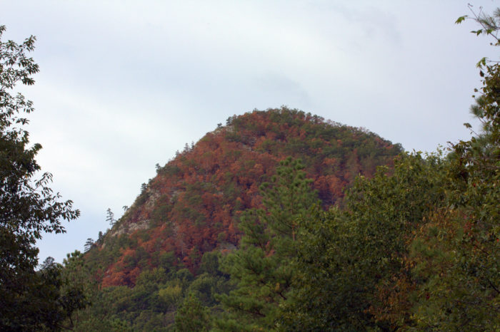 9. The Ouachita National Forest near Forked Mountain