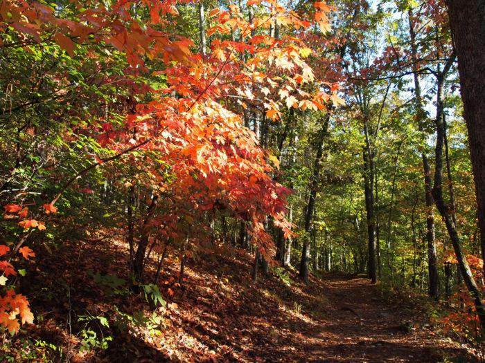 1. Sweetwater Creek State Park—1750 Mt Vernon Rd, Lithia Springs, GA 30122