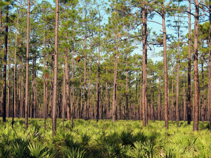 Okefenokee straddles the Georgia-Florida state line, and in fact, is just a short drive from Jacksonville, Florida.