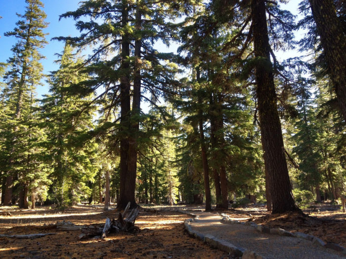 This lovely, well-maintained trail is one mile in each direction and is accessible for wheelchairs and strollers.