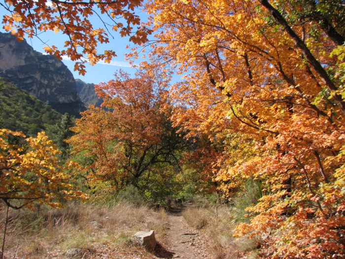 The foliage is breathtaking, and the West Texas desert is cool enough this time of year to comfortably enjoy the scenery.