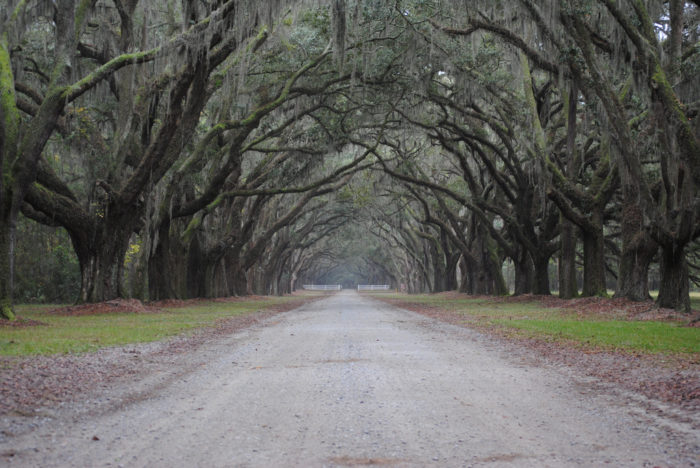 Visitors can drive down this road at their leisure, and experience the true beauty of nature.