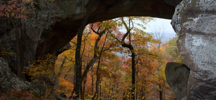 1. The Ozark National Forest near Mountain Home