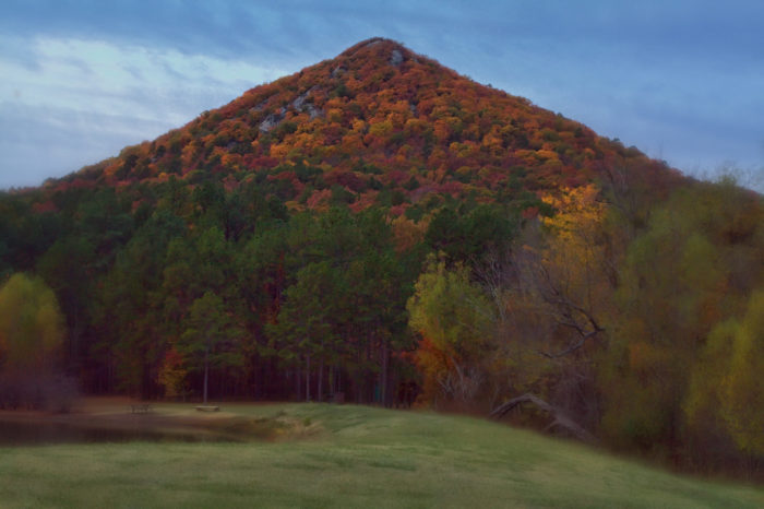 7. The woods on Pinnacle Mountain
