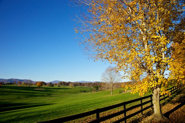 October 15th - 25th: Central Virginia