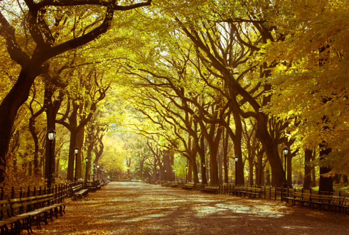 With New York City's fall foliage about to peak, now is the perfect time to take a trip to The Mall of Central Park!