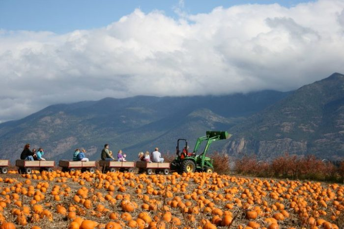 8.  Go to a pumpkin patch.