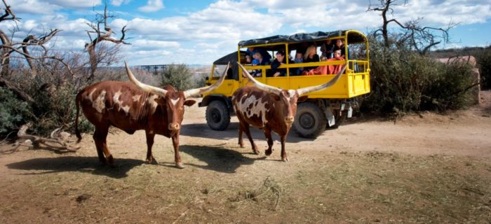 "One of the main attractions here are the safari rides you can take around the park to the animals interact in a ""natural"" environment."