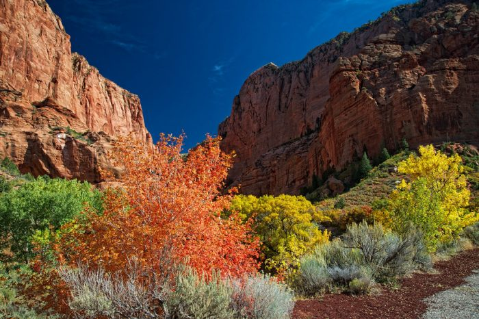 The vibrant colors of the fall foliage really stand out against the Navajo sandstone.
