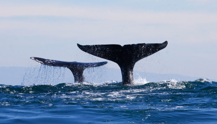 If you're lucky, you may even spot a whale from the pool area, which overlooks the Pacific!