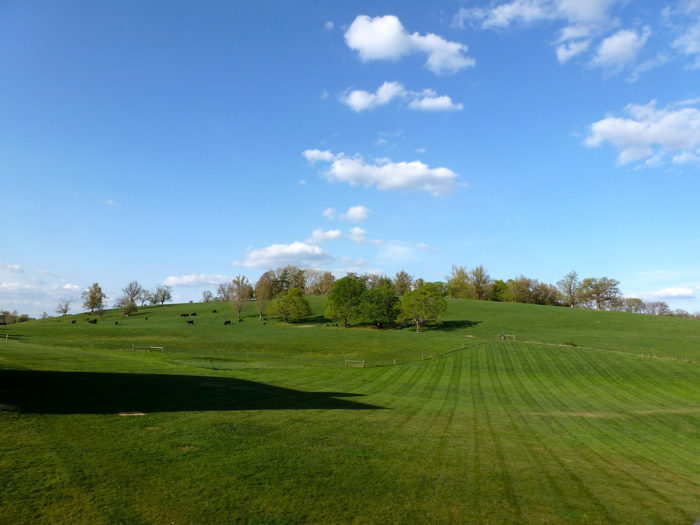 The hill is gorgeous during the day as well. Stop by early in the evening to roam around the area and watch the cows graze.