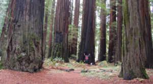 Northern California's Avenue Of Trees Is Downright Magical And You Need To Visit