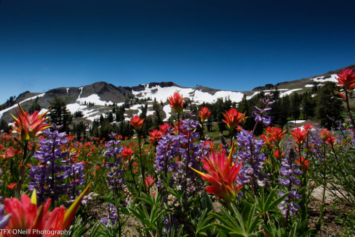5. If you visit in early summer before the snow melts completely, you'll get to see the stunning wild flowers that scatter the hillside in a variety of colors.
