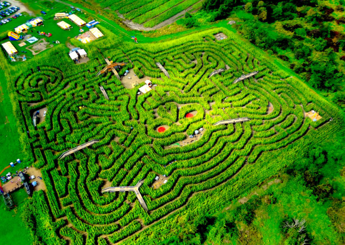 """With over 3 miles of pathways, you couldn't ask for a better fall adventure than this epic corn maze. The 8-acre """"mega maze"""" has been entertaining and disorienting locals for generations."""