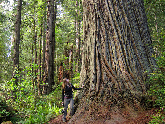You'll feel dwarfed below the majestic redwood giants. There are so many impressive sights on the Fern Canyon trail. Prairie Creek State Park is definitely a must see.