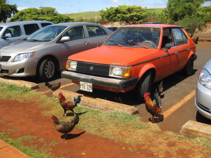 8. There are chickens all over the place.