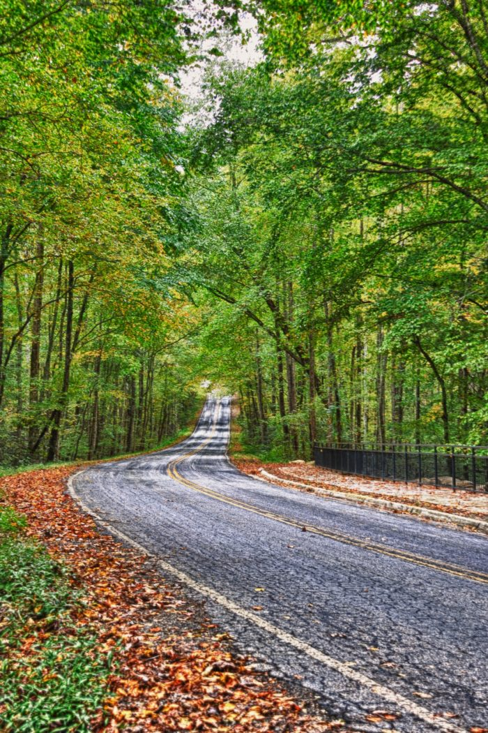 Getting to this secret spot starts with this gorgeous drive through stands of lush trees. If you're going in the fall, the colors will be phenomenal!