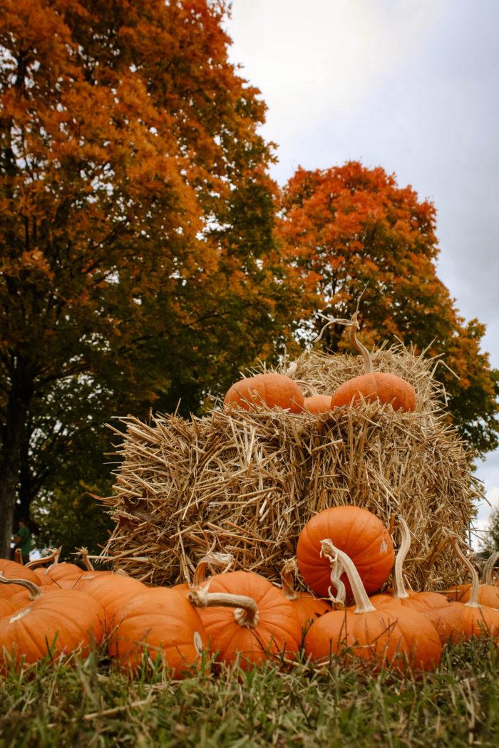 2. Or find a sweet pumpkin patch.