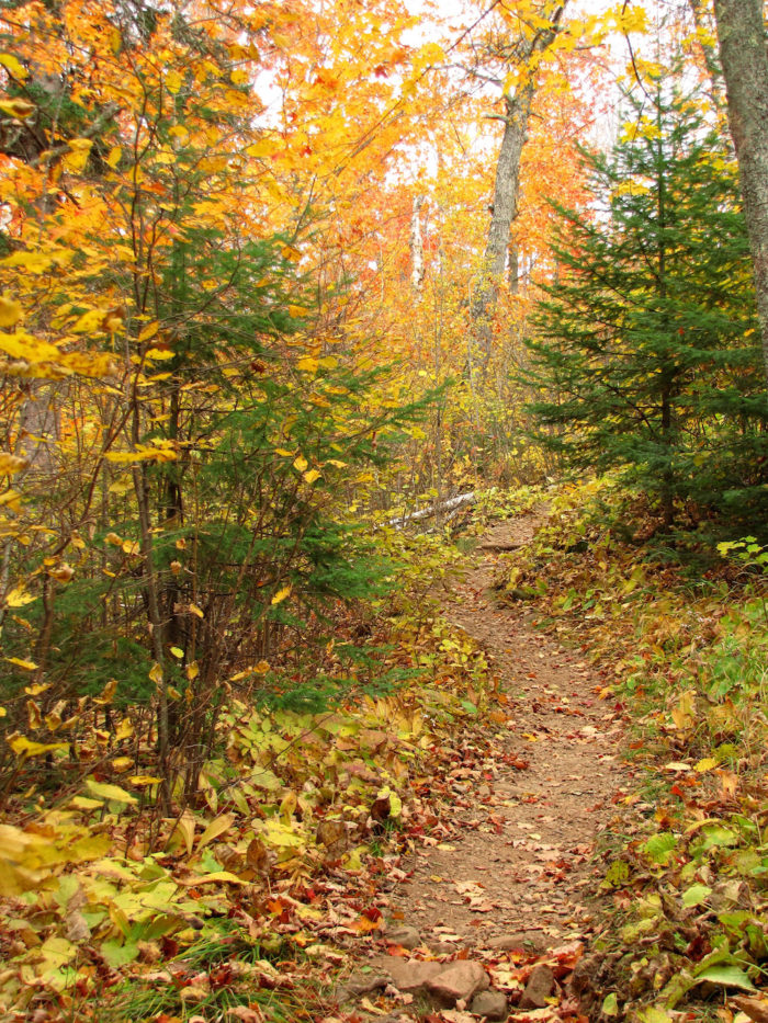 3. Superior National Forest