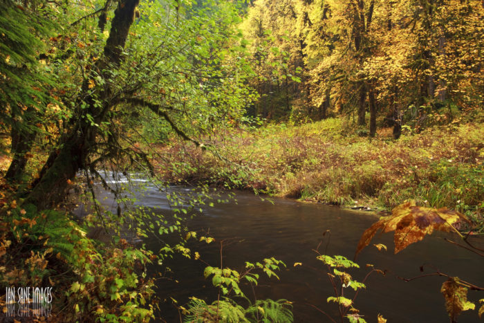 Numerous amazing trails wind through the stunning landscape. You'll pass serene creeks framed in gold foliage...