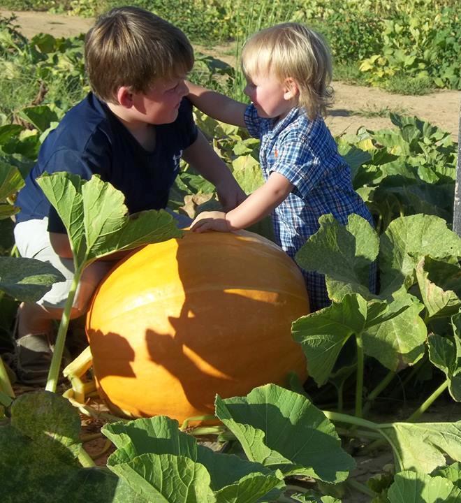 9. Pumpkin Patch Farms, Blue Mountain