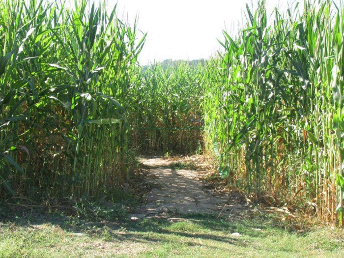 3. Farmland Adventures (Springdale)