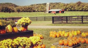 These 9 Charming Pumpkin Patches In Kentucky Are Picture Perfect For A Fall Day