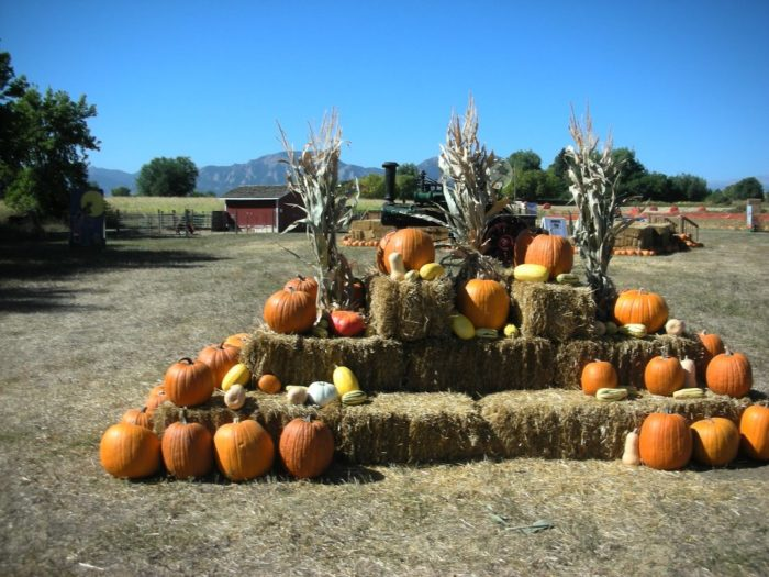 5. Cottonwood Farms, Open Daily Through October 31st