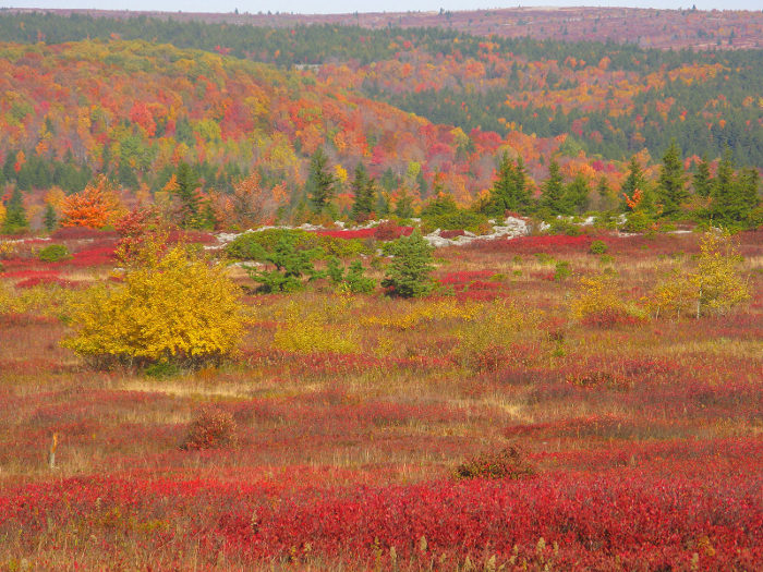 In the autumn, however, the display of colors is something extra special.