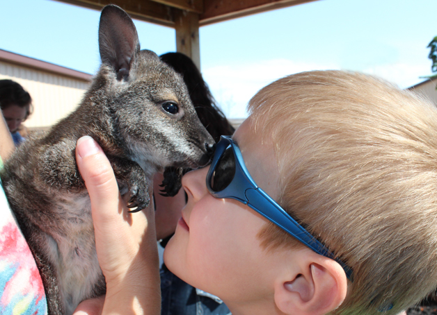 Throughout the park, hands-on opportunities can be enjoyed by the whole family. Whether you're holding a lizard or petting an adorable baby wallaby, you'll leave Boulder Ridge with a wealth of new experiences.