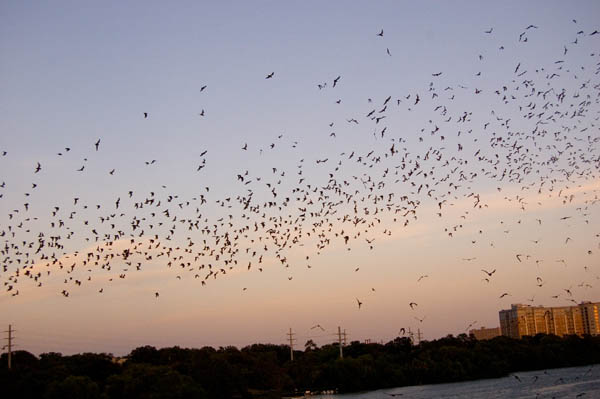 Now, Austinites celebrate the bats every year.