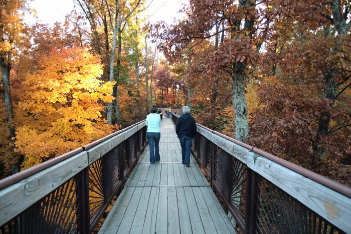 Hike in Bernheim Forest