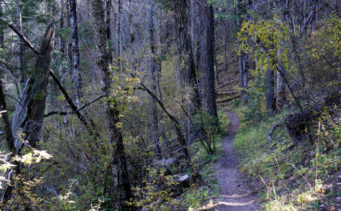 The Rim Trail is another forest hike that rewards you with great views. It's popular with mountain bikers.