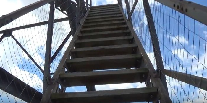 There are 69 steps to reach the room above the forest.