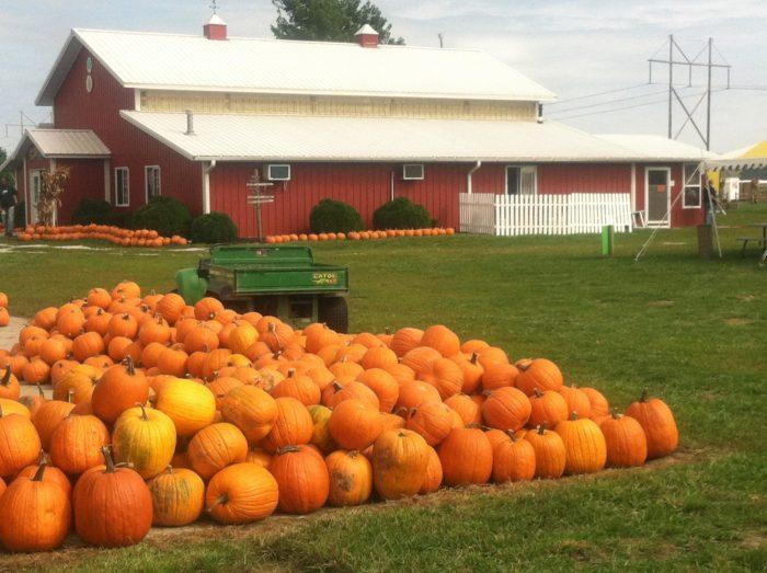 2. Carolyn's Country Cousins Pumpkin Patch - Liberty