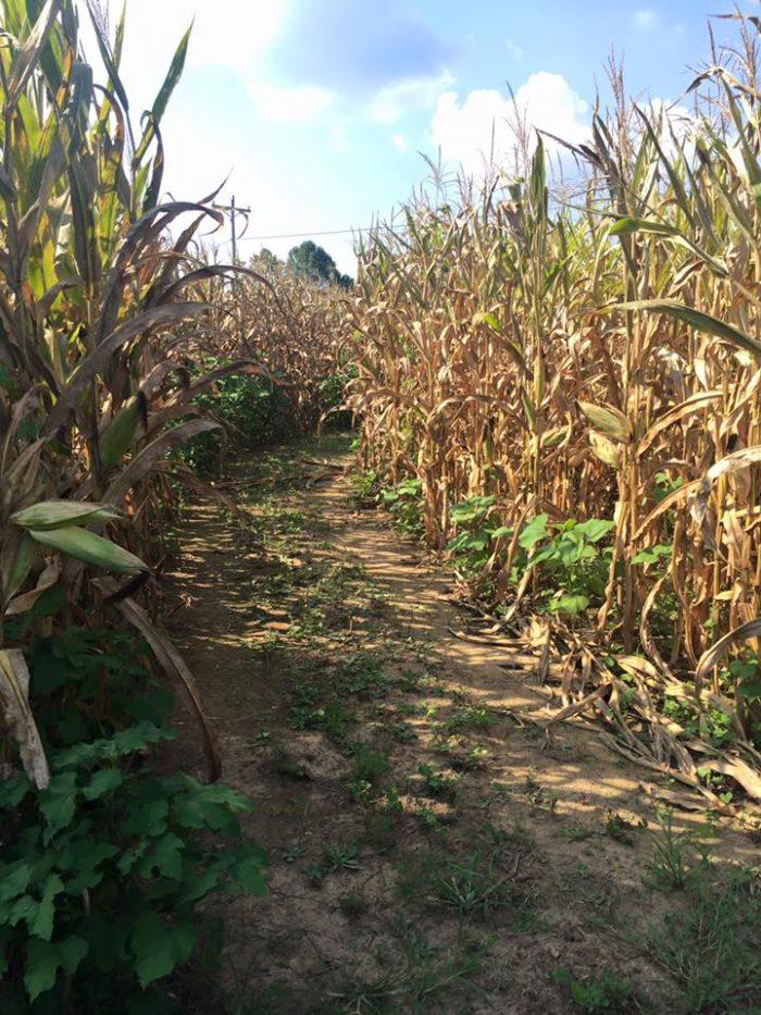 8. Christian Way Farm, Hopkinsville