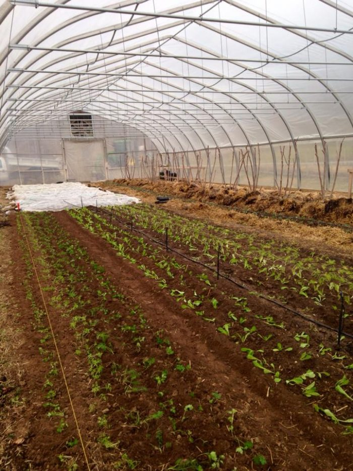 Even in the winter, Claverach Farm stays open and continues to harvest their ingredients.