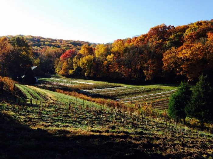 Nestled in the small town of Eureka, Claverach Farm sits on 300 acres of rugged ground in the Ozark hills. The property is especially spectacular to see during the fall.