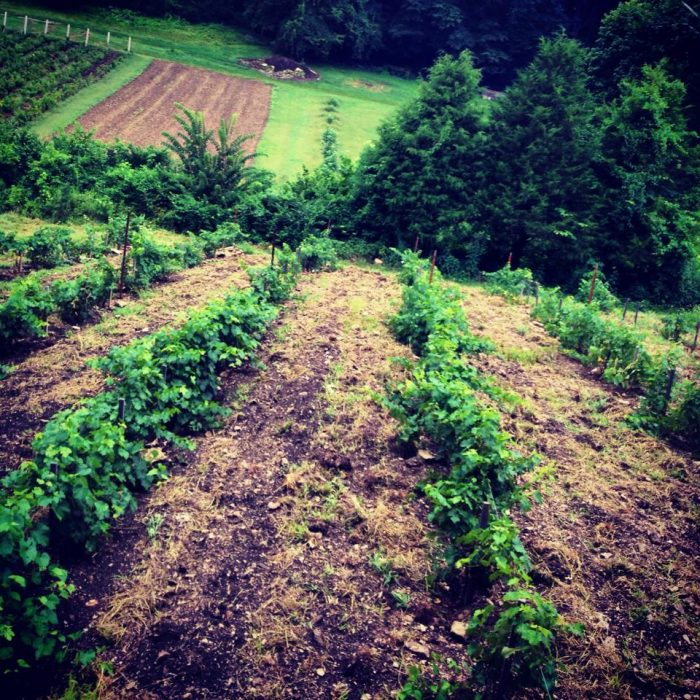 If you get there early, feel free to  tour the gardens, orchards, and vineyards.