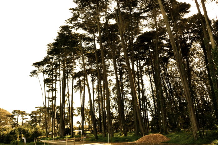 5. Ecology Trail at the Presidio: Inspiration Point Overlook, San Francisco