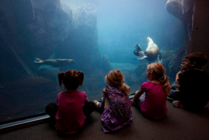 On a rainy day, the Alaska SeaLife Center is the perfect place to enjoy marine animals, educational activities and tons of fun indoors and out of the cold.