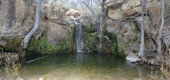 There are also several hikes with seasonal waterfalls, such as the First Creek Canyon Trail, an unexpected treat in the desert.